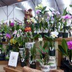 Akatsuka Orchid Gardens in Hawaii