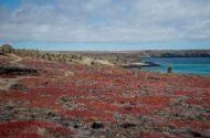 Amazing Scenery of South Plaza Island, Galapagos