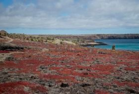 Amazing Scenery of South Plaza Island, Galapagos