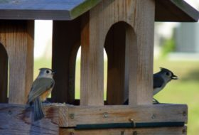 Bird Feeding Tips for FeederWatch Season