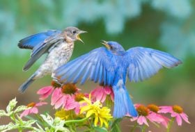 The Winner of the 2016 Backyard Photo Contest Is…