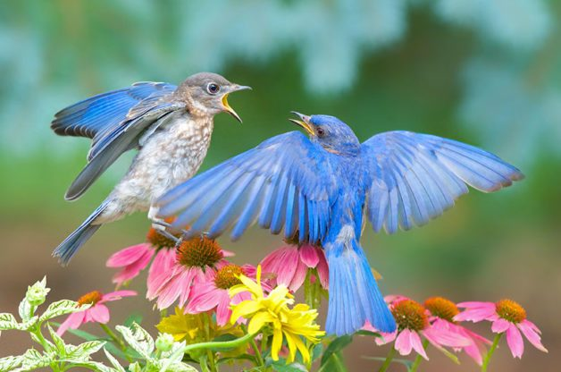The Winner of the 2016 Backyard Photo Contest Is... - Birds and Blooms
