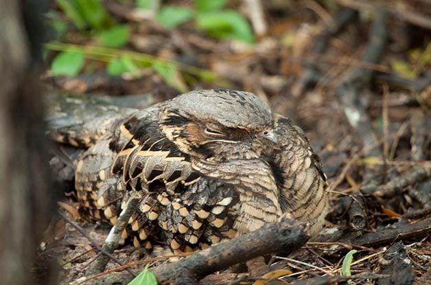 Best Birding Hotspots in South Texas