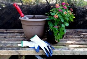 Cooperative Extension Service Offices, a Valuable Garden Tool