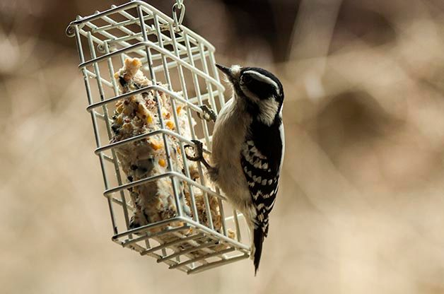 Top Tips for Winter Bird Feeding