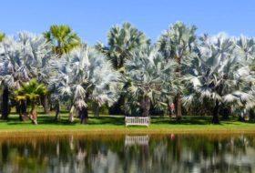 A Visit to Fairchild Tropical Botanic Garden