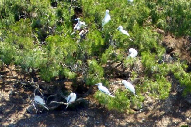 Hawaii Birding Kilauea Point NWR