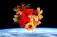 Nature News 2016 Space Zinna Scott Kelly