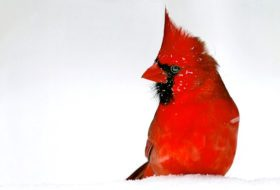 10 of the Snowiest Bird Photos