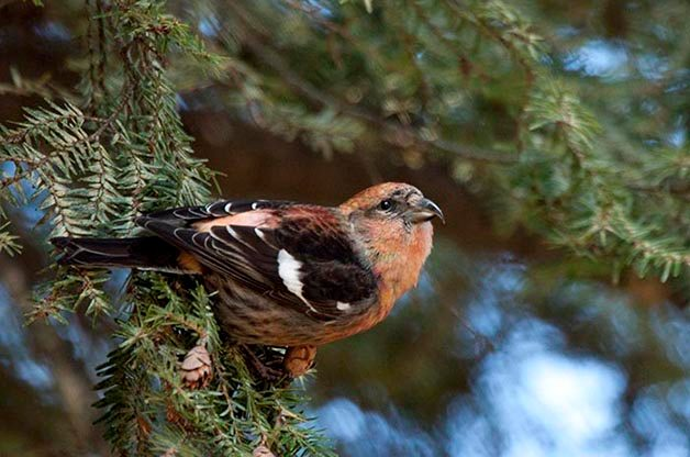 What Causes Birds Start to Migrate