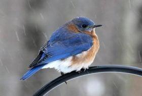 Meet Merlin: the Must-Have Bird ID App