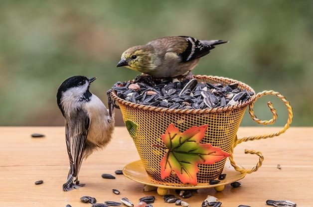 Providing different seed blends will attract chickadees, goldfinches and more.