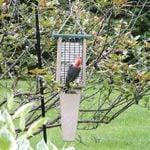 The Best Suet Feeders for Winter Birds