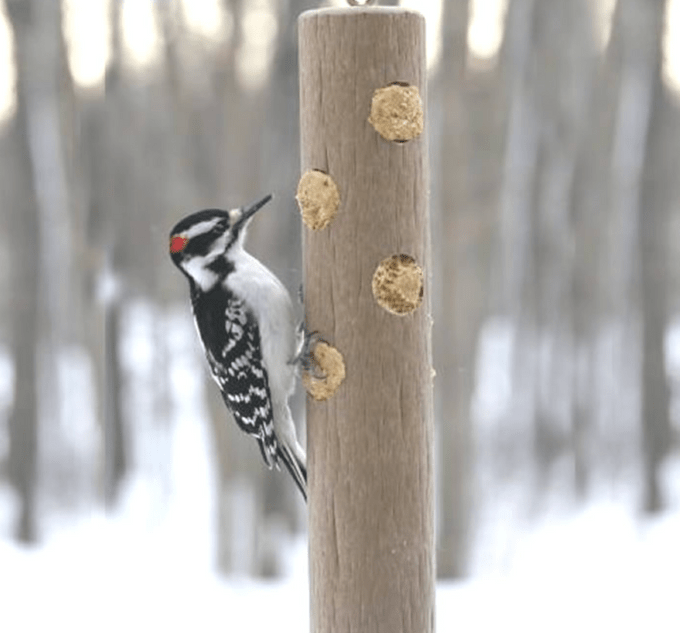 suet log feeder