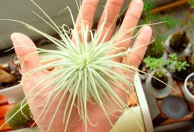 Get the Dirt on Air Plants