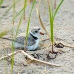 Beach Birds: Coastal Fliers and Beach Birding Locations