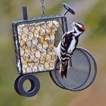 The 4 Best Foods for Attracting Woodpeckers