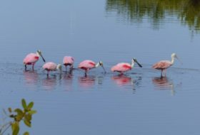 Florida Birding Festivals for Winter 2017