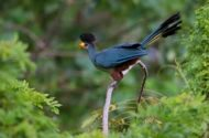 Incredible Birds of Uganda