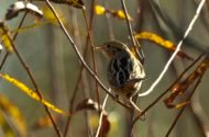 Join a Christmas Bird Count this Winter