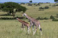 Amazing Safari Experience in Uganda