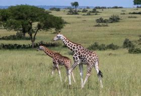 Amazing Safari Experience in Uganda