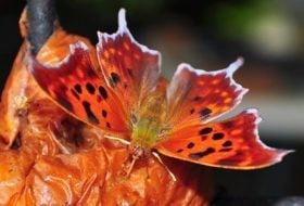 How Butterflies and Bugs Hibernate