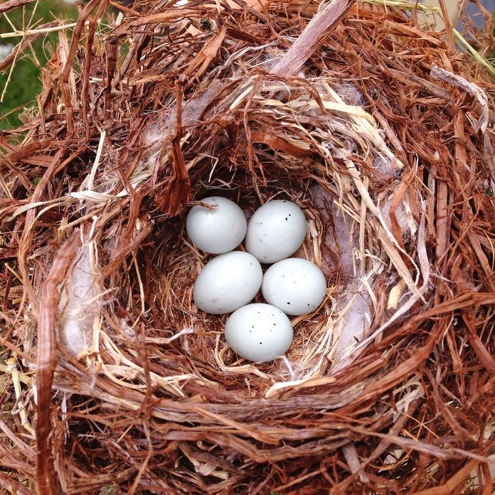 facts about bird eggs