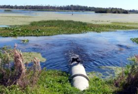 Birding Hotspot: Orlando Wetlands Park