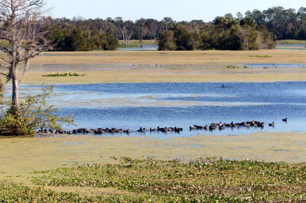 Birding Hotspot Orlando Wetlands Park