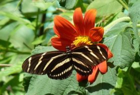 5 Butterfly Nectar Plants to Grow From Seed