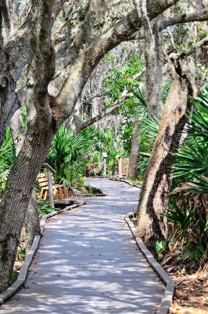 Merritt Island Florida birding trip
