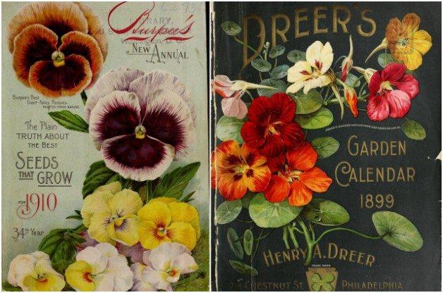 Vintage Seed Catalogs