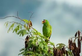 Top Birding Hotspots to Escape the Winter Months