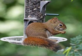 8 Nutty Facts About Squirrels