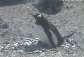 Fantastic Penguin Cam