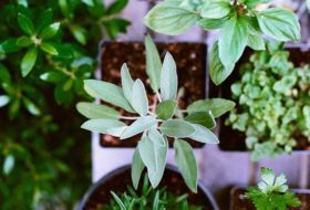 6 Ways Green Thumbs Can Thrive in Winter