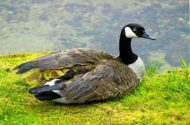 15 Adorable Birds to Welcome Spring