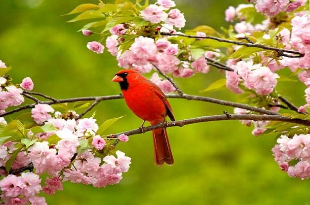 Image result for photo of spring with bird