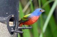 10 Ways to Take Bird Photos Like a Pro