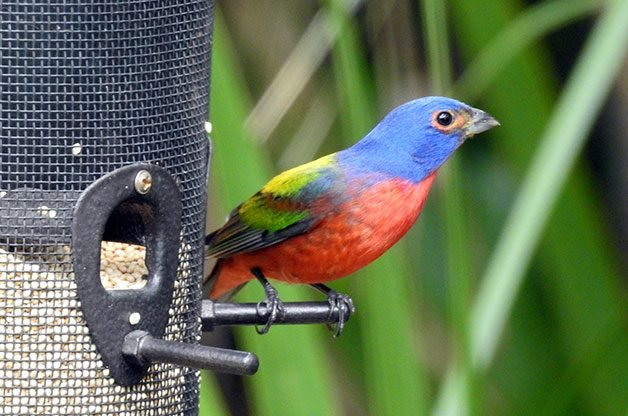 Birds and Blooms - America's #1 Backyard Birding and Gardening ...