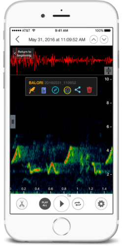 New App for Identifying Bird Song