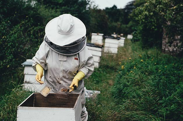 Can I Raise Bees In My Backyard my adventures as a newbie beekeeper - birds and blooms