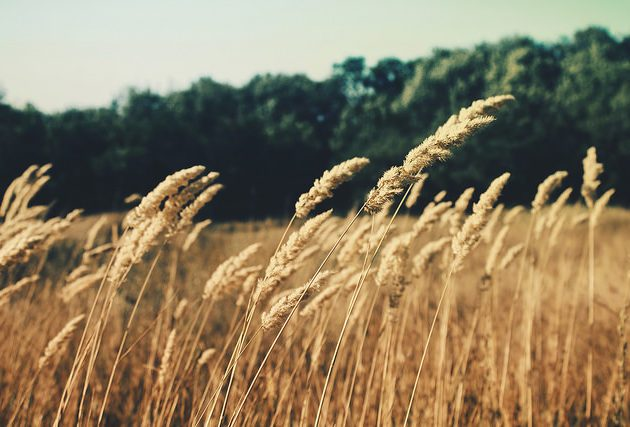 You don't need to grow a whole field of barley to get home-grown beer.