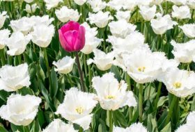 Attend the Chicago Flower & Garden Show and See Garden Expert Melinda Myers