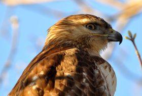 The Basics of Bird Beaks