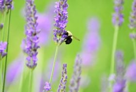 8 Ways You Can Help Save the Bees