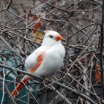 Learn the Difference Between Albino and Leucistic Birds