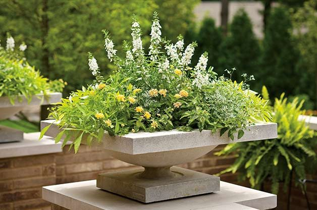 Once you've got a thriller, spiller and filler, add in more favorites, like the yellow lantana shown here. (In this Proven Winners container the white Angelonia is the thriller, sweet potato vine on the left is the spiller and on the right, Diamond Frost euphorbia is the filler.)