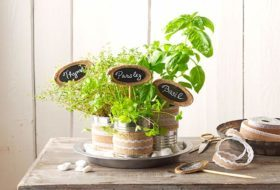 DIY Tin Can Herb Tabletop Set
